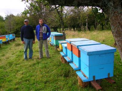 20080715081028-abejas-circuito-colonias-del-volcan-calbuco.jpg